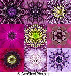 Collection of Nine Purple Concentric Flower Mandala...