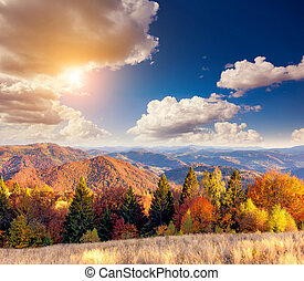 beautiful autumn day - Majestic particolored forest with...