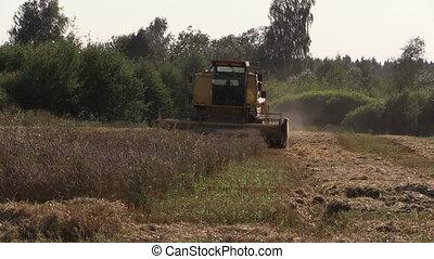 farm combine thrash on village grain