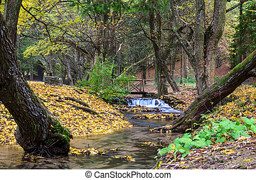 Mountain river in forest, autumn landscape
