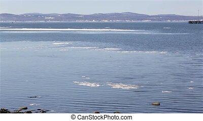 Penobscot Bay with ducks - Video of Penobscot Bay in...