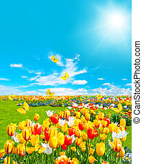 tulip flowers in green grass. sunny blue sky