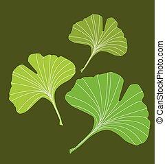 ginkgo - 3 ginkgo leaf