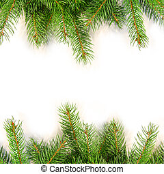 Pine branches isolated on white