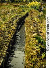 Ditch - Picture is about small ditch and yellow flower near...