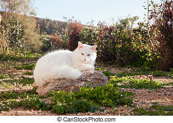 Greek cats - Nice white fluffy cat with beautiful eyes on...