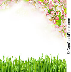 apple tree blossoming and green grass