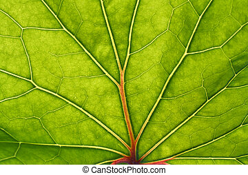 green leaf with red veins background