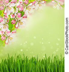 apple tree blossoming and green grass over blurred background
