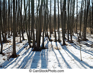Spring forest with snow