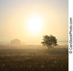 single tree in mist