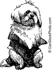 Shih tzu with shirt, hand drawn vector.