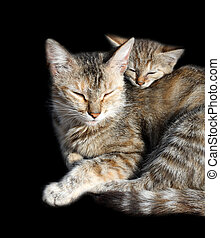 sleeping cats - mother and offspring isolated on black