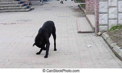 Black Dog homeless on the street asks passers food - Mongrel...