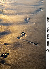 footprints - Footprints on wet shining sand on the beach