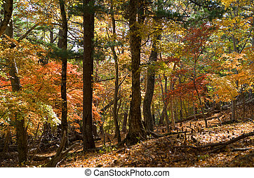 Autumn in forest 2