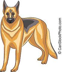 Vector. German Shepherd.