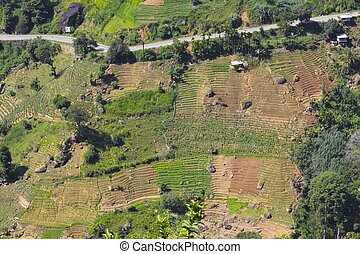 Hill Country Terracing, Sri Lanka - Colorful terracing for...