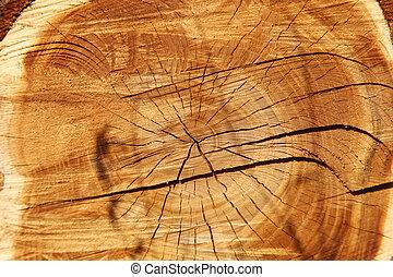 árbol,