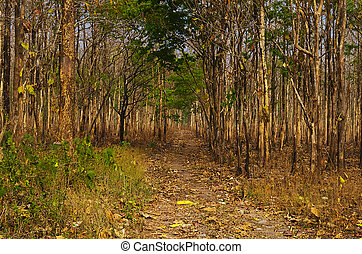 Foot path in dense forest - some secrete of foot path in...