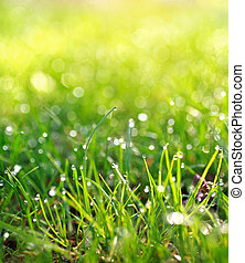 Dewdrops - dew drops on the grass