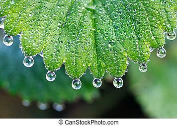 Dewdrops - dew drops on green leaf