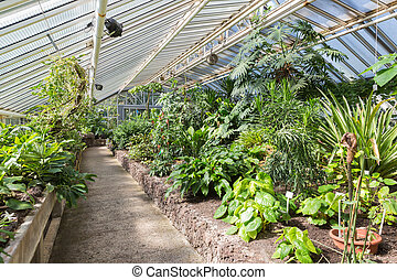 Greenhouse with tropical plants in Berliner botanical garden