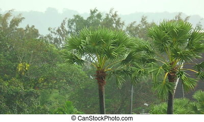 Tropical rain - Palm trees under a tropical rain, Phuket,...