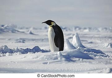 Standing penguin