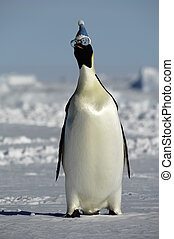 Winter penguin with sunglasses - Penguin having fun on ice