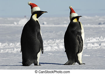 Penguin pair at Christmas day - Antarctic penguin pair at...