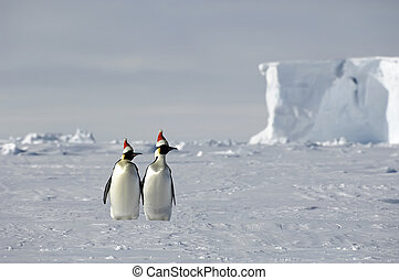 Antarctic Christmas - Christmas on ice with a penguin couple