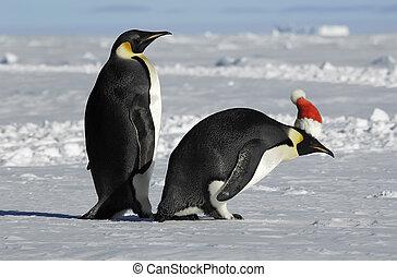 párosít, karácsony, pingvin