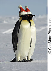 Penguin couple celebrates Christmas - Antarctic penguin...