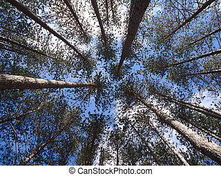 tree canopy - camp photography