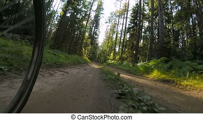 POV cycling in a summer forest - Low angle view of a cyclist...
