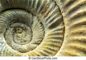 Ammonite spiral - Close-up of ammonite spiral windings