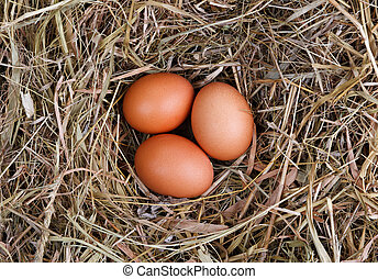 nest eggs at home background