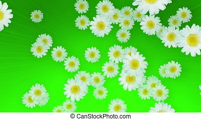Spring Summer Daisies Green - Daisies in the air in seamless...