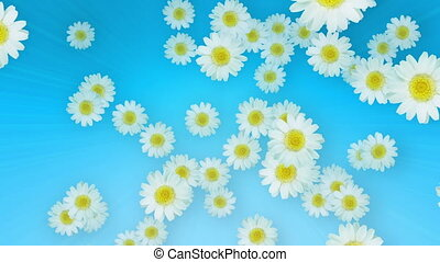 Spring Summer Daisies Blue - Daisies in the air in seamless...
