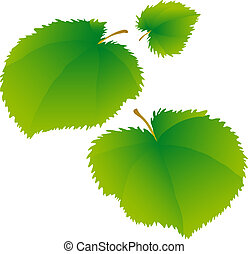 Lime leaves - Young green leaves of a linden.