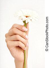 White flower - The well-groomed hand gracefully holds the...