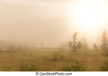 early foggy morning in the Swedish mountains