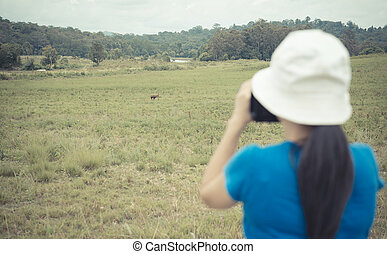 travel - Female tourist taking pictures of animals on...