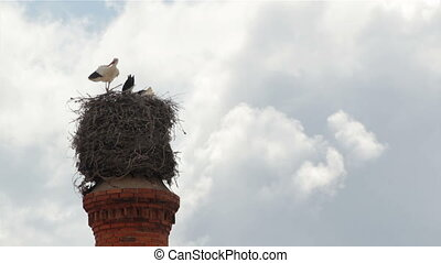 Stork Chimmney Nest Still - Storks stading in nest on top of...