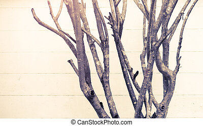 Leafless branches on wall