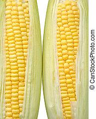玉米, 被隔离, 綠色, 背景, 蔬菜, 新鮮, 白色, 離開