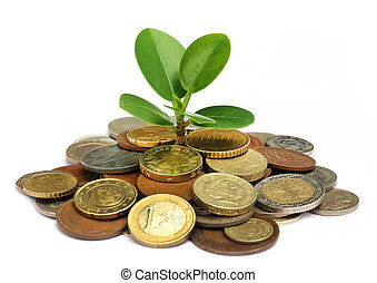 Money plant - Plant grows from pile of coins over white...