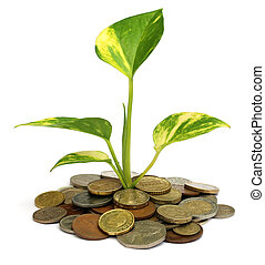 Money plant grows from pile of coins
