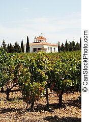 Spanish vineyard, Montilla. - View across a Spanish vineyard...